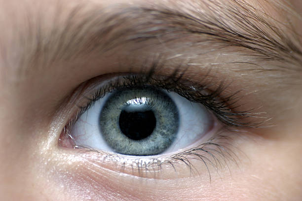 close-up of a person with gray eyes - close to stock pictures, royalty-free photos & images