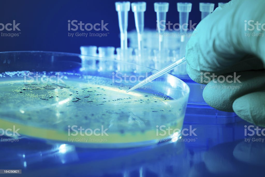 Close-up of a Petrie dish with bacteria colonies in a lab stock photo