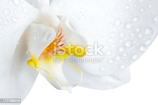 White moth orchid shot macro, isolated on white.