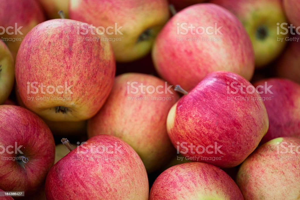 Closeup of a pile of reds and green apples Ripe red apples Agricultural Fair Stock Photo