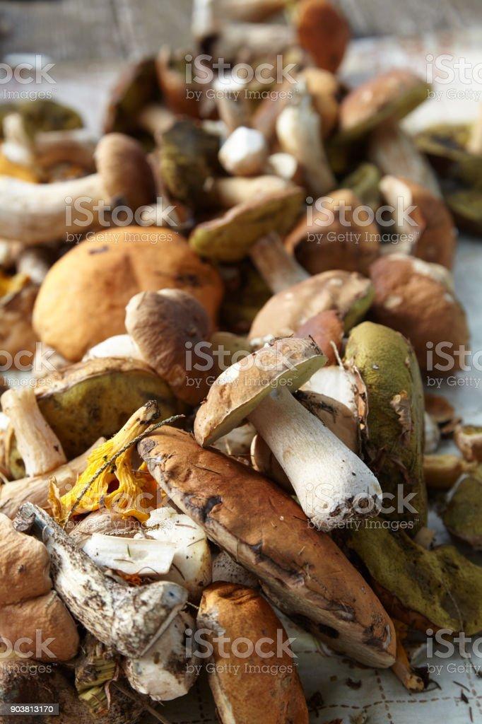 Nahaufnahme von einem Haufen von essbaren Pilzen – Foto