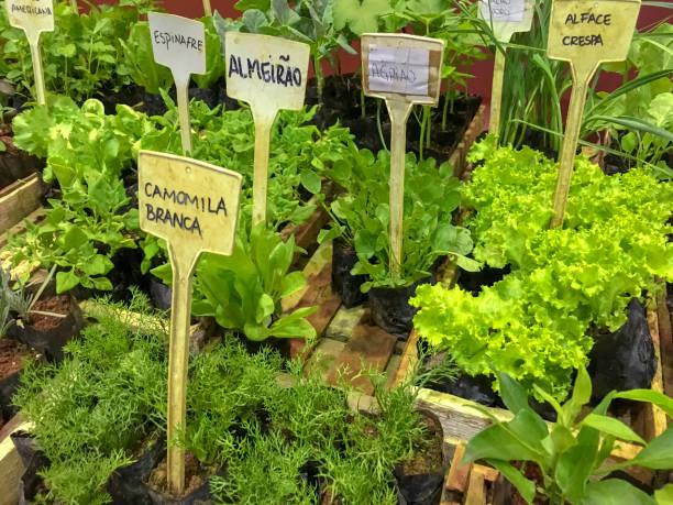 Nahaufnahme von einer Gärtnerei von Heilpflanzen – Foto