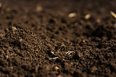 Closeup of a plowed field, fertile, black soil.