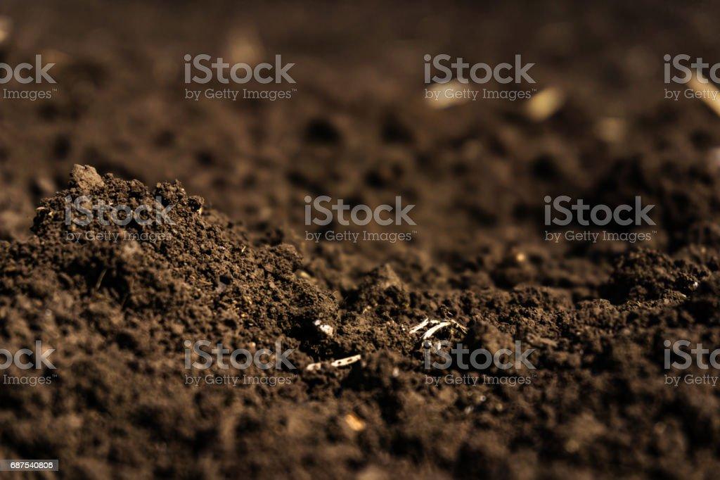 Closeup of a plowed field, fertile, black soil. stock photo