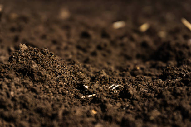 closeup of a plowed field, fertile, black soil. - dirt stock photos and pictures