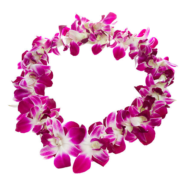 Close-up of a purple and white lei over white background stock photo