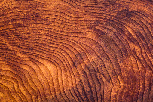 Polished redwood burl wood grain texture. Natural finish, with great care taken with white balance to preserve the original colors.