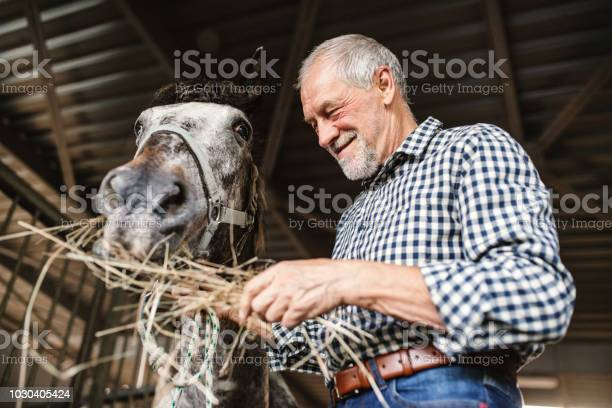 Closeup of a senior man feeding a horse hay in a stable picture id1030405424?b=1&k=6&m=1030405424&s=612x612&h=bbl reohax6obeqgkkk5aph82v5o0zi6kpn2ybvoqs4=
