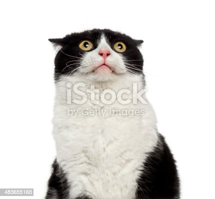 istock Close-up of a shy mixed-breed cat looking up 483655165