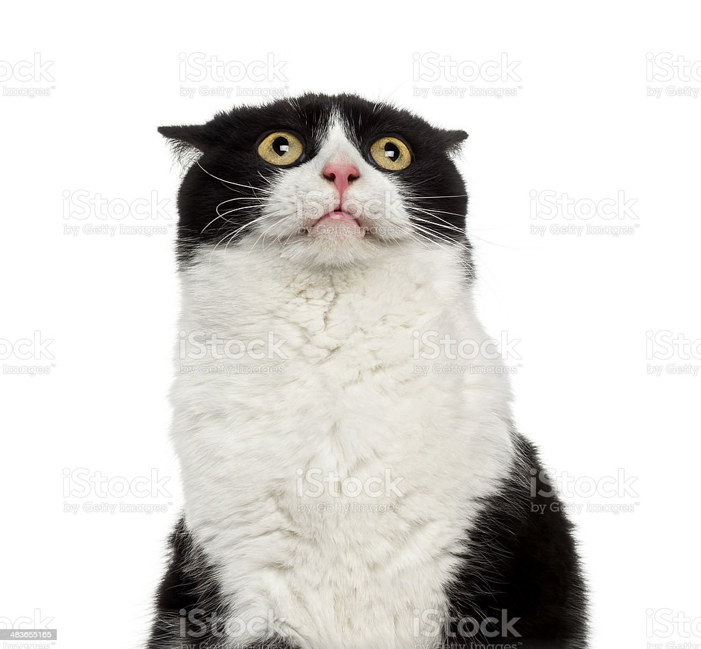 Close-up of a shy mixed-breed cat looking up stock photo