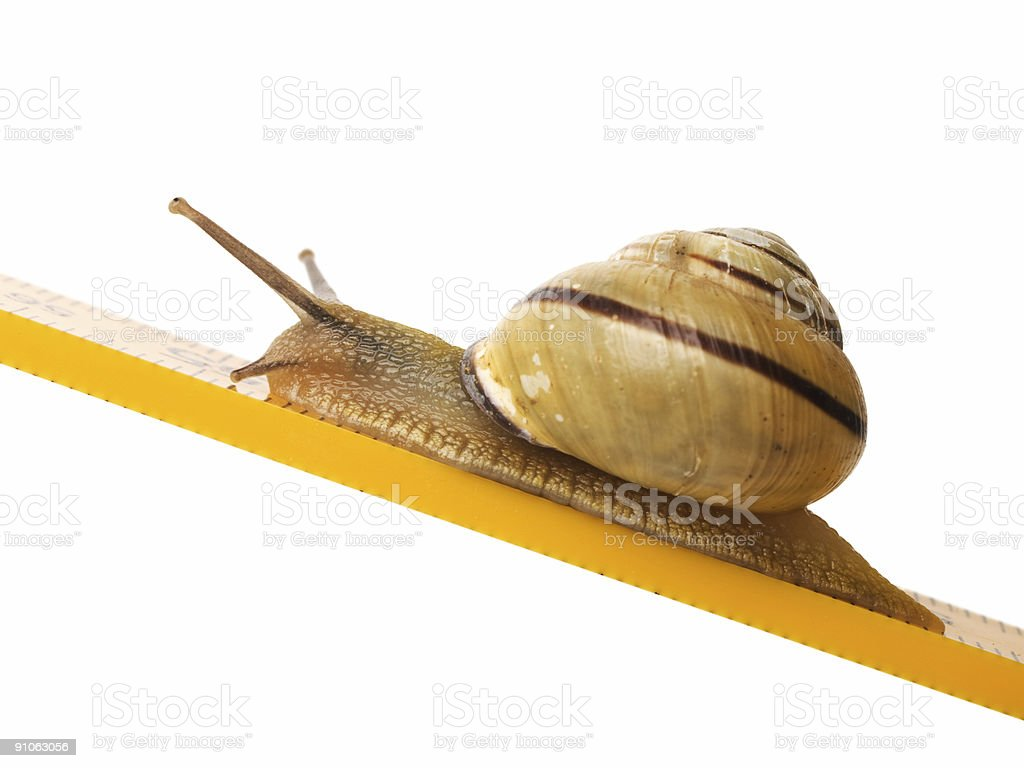 Close-up of a snail climbing up a yellow surface royalty-free stock photo