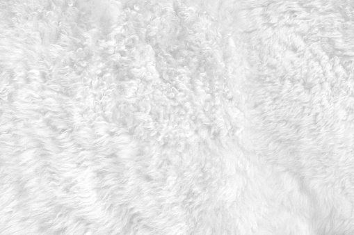 Soft white fur for backgrounds or textures.