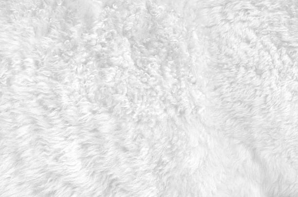 Close-up of a soft white furry blanket Soft white fur for backgrounds or textures. animal hair stock pictures, royalty-free photos & images