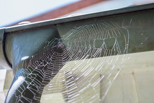 Close-up of a spider web on a rain gutter glittering in the sunlight, Germany