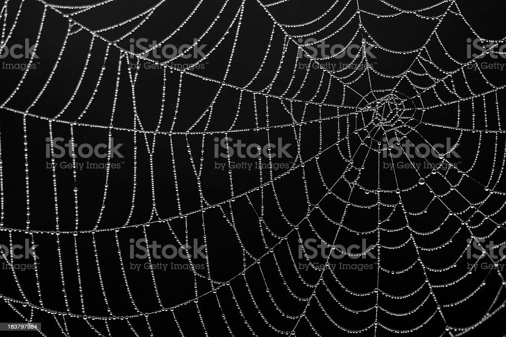 Close-up of a spiderweb silk details on black background stock photo
