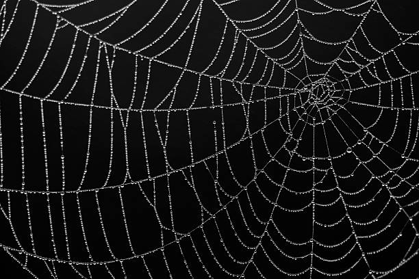 close-up of a spiderweb silk details on black background - spider web stock photos and pictures