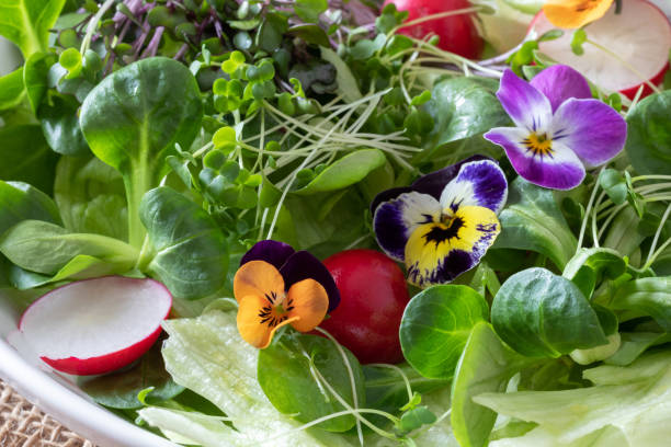 Closeup of a spring salad with edible pansies, lamb's lettuce and fresh microgreens Closeup of a spring salad with edible pansies, lamb's lettuce and fresh broccoli and kale microgreens microgreen stock pictures, royalty-free photos & images