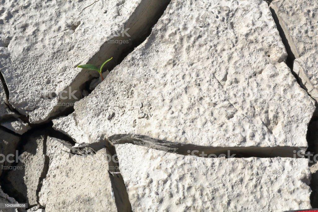 Un primer plano de un brote, creciendo en una grieta de un suelo de arcilla gris seco durante un día asoleado caliente en el lago artificial del Mediano en el Pirineo Aragonés Español - foto de stock