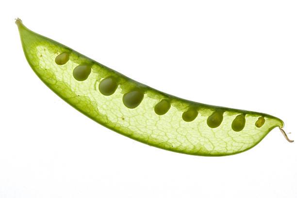 Close-up of a sugar pea stock photo