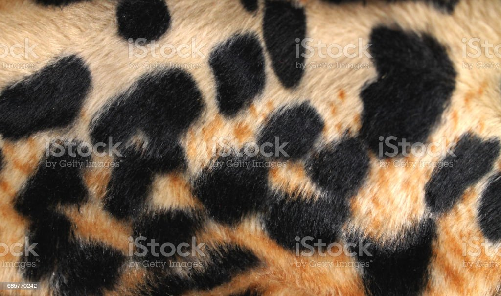 Back of the body of a large African cat. Tiger skin texture close-up....