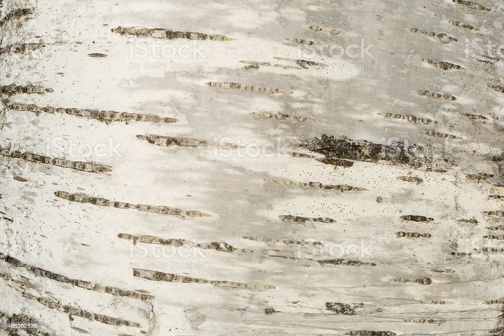 Closeup of a tree bark texture royalty-free stock photo