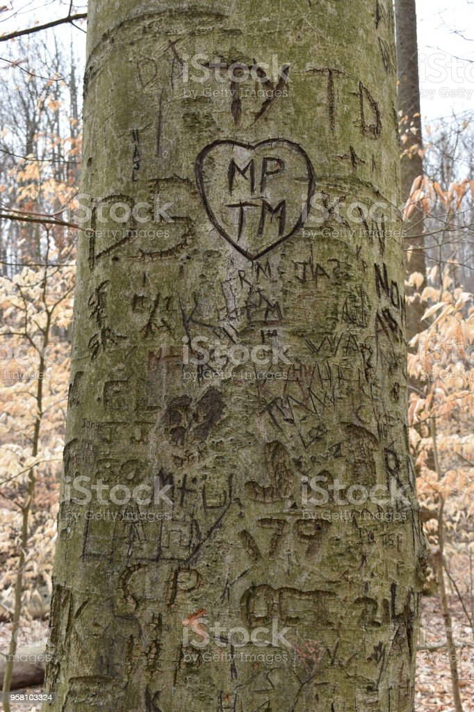 Closeup of a tree with carvings in a forest stock photo
