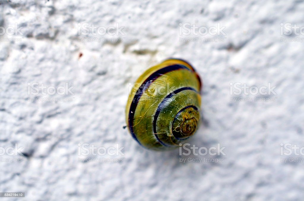 closeup of a vineyard snail on a white background stock photo
