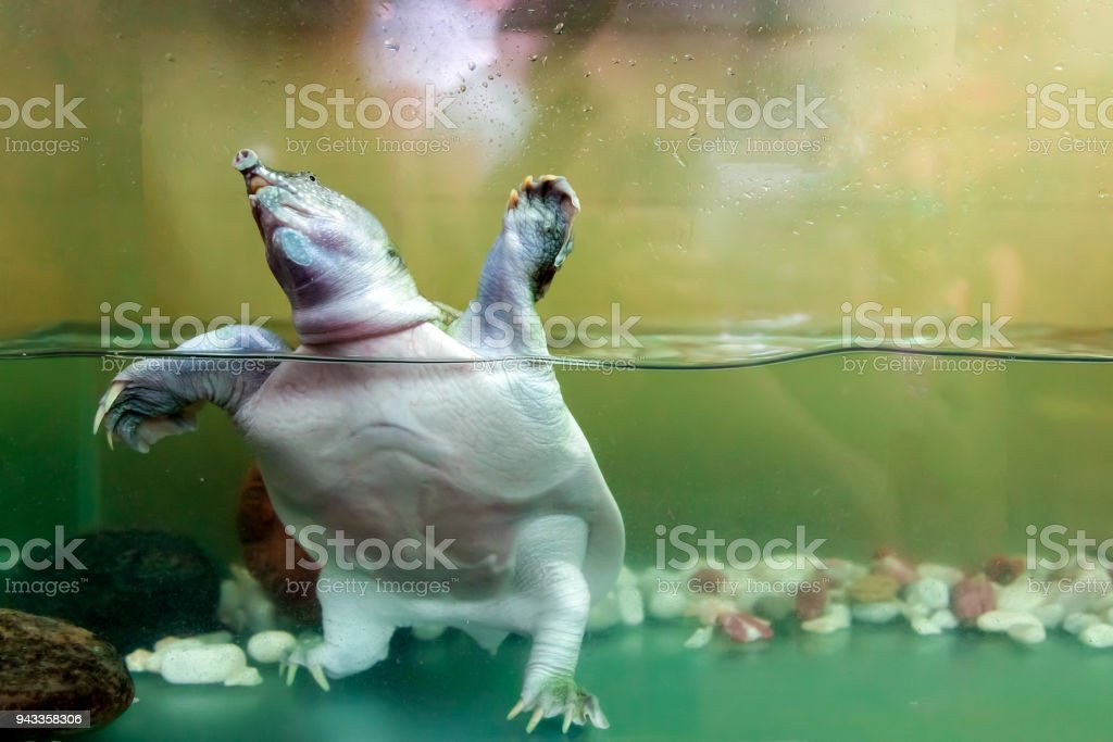 Close-up of a waterfowl turtles stock photo