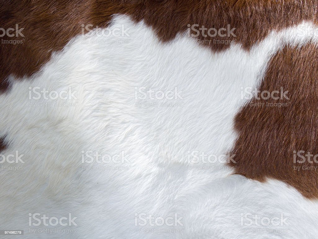 Close-up of a white and brown cow's fur royalty-free stock photo