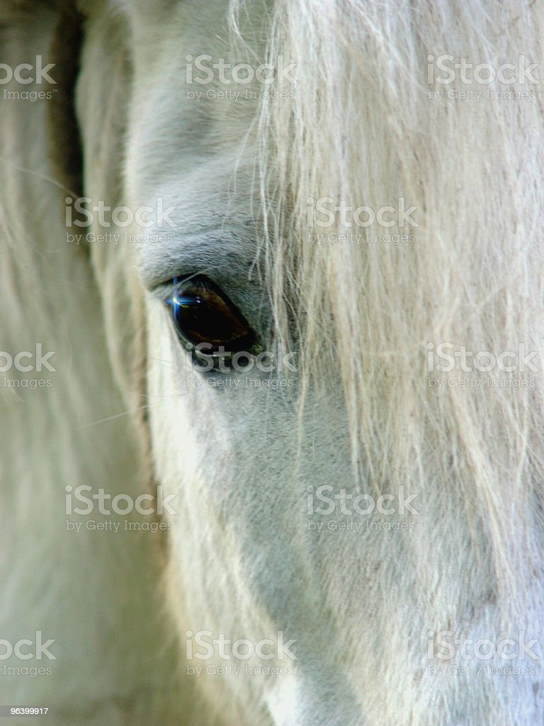 Closeup of a white horse - Royalty-free Animal Stock Photo