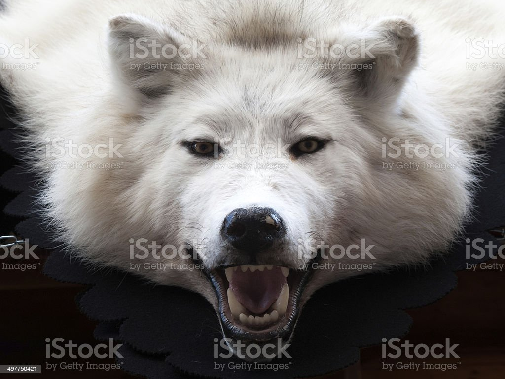 Close-up of a Wolf rug stock photo