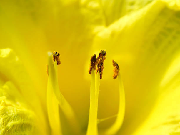 Closeup of a yellow flower stok fotoğrafı