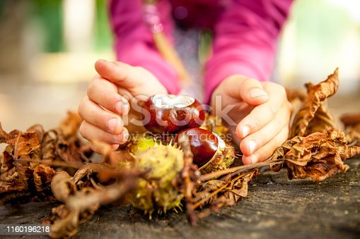 Close-up of a Young Girl Holding Chestnuts on Ground.