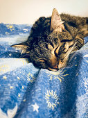 Young male tabby cat cutely sleeping on a blue blanket with yellow and white patterns, close-up