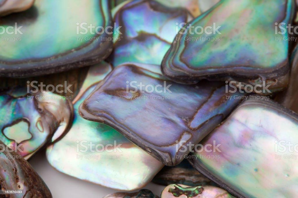 Closeup of abalone shell stock photo