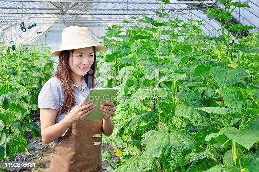 Close-up of agriculture scientist working at greenhouse.