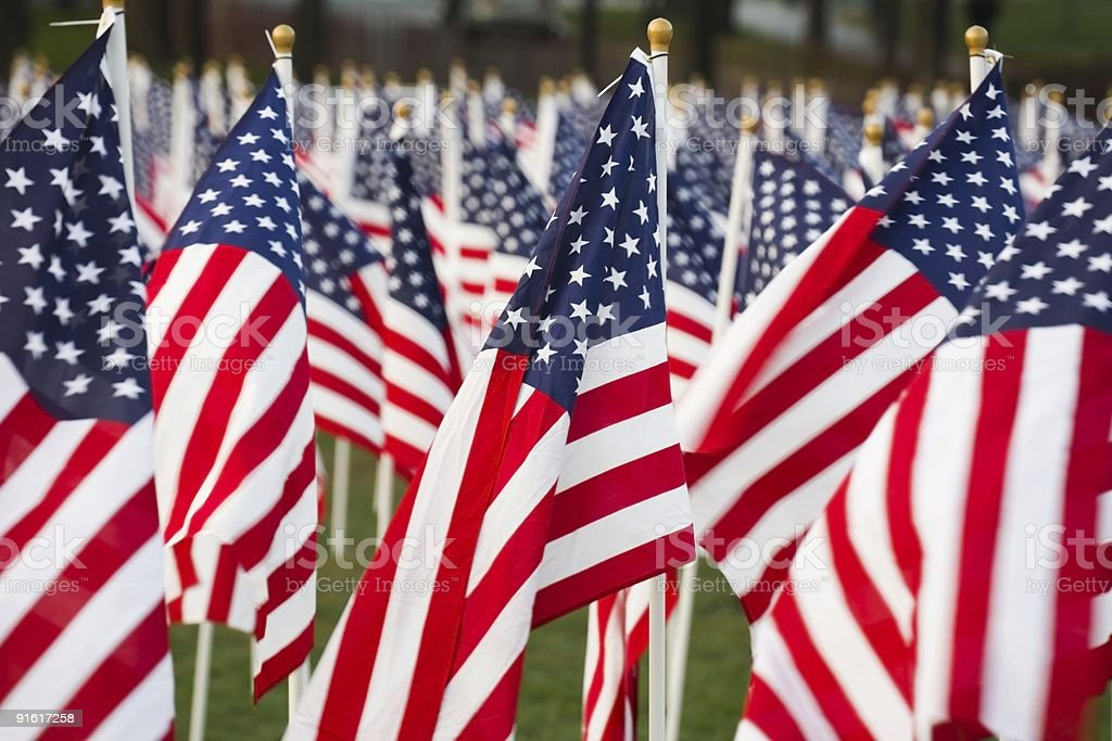A close-up of American flags displayed on a field stock photo