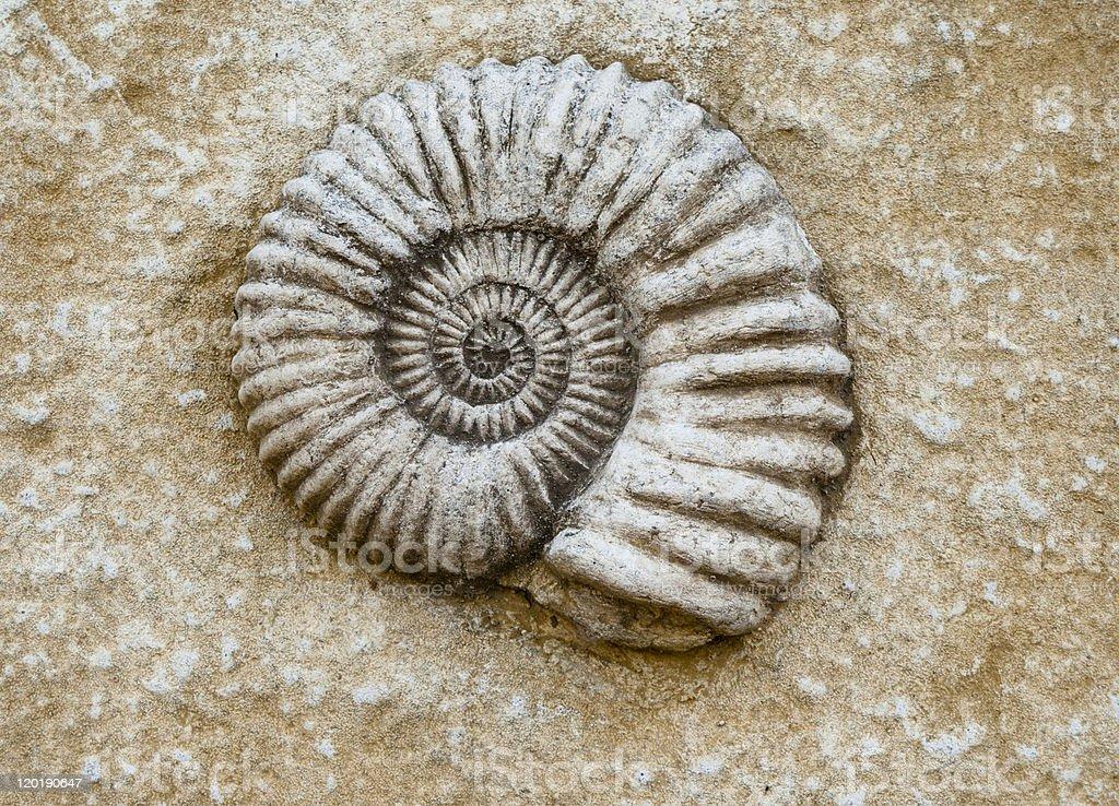 Nahaufnahme von Ammonit fossil – Foto