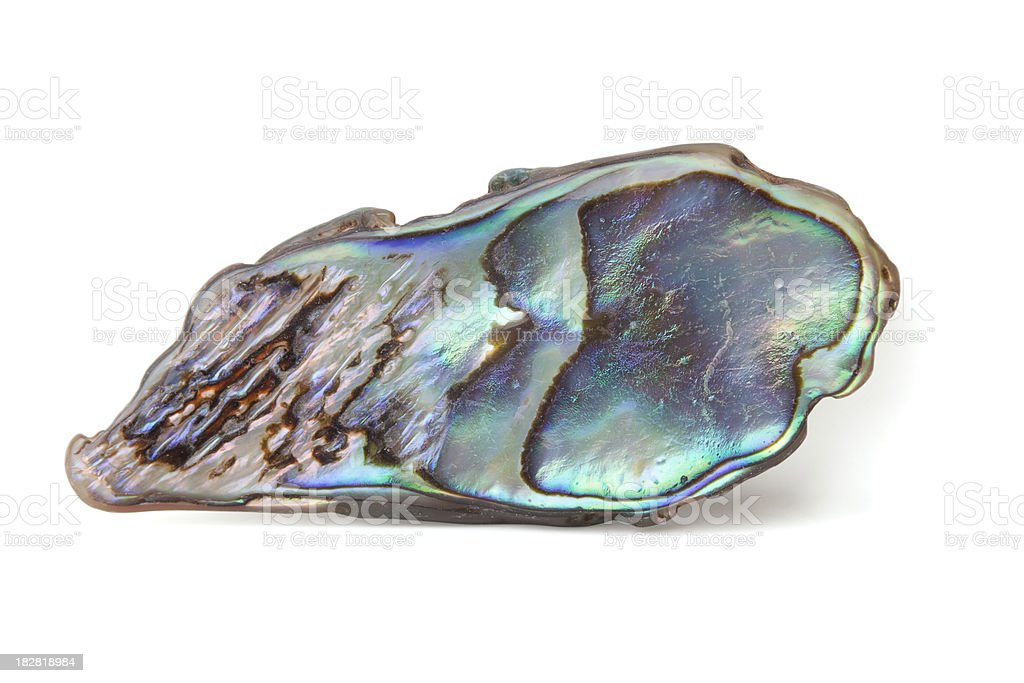 Closeup of an abalone shell royalty-free stock photo