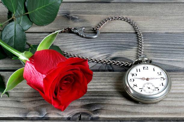 nahaufnahme von einer antiken taschenuhr und eine rote rose auf einem antiken holztisch - sanft und sorgfältig stock-fotos und bilder