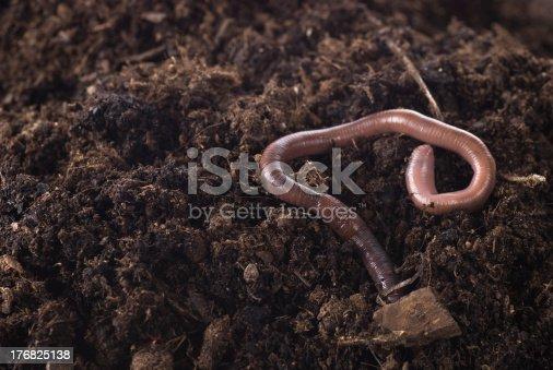 Earthworm in soil.