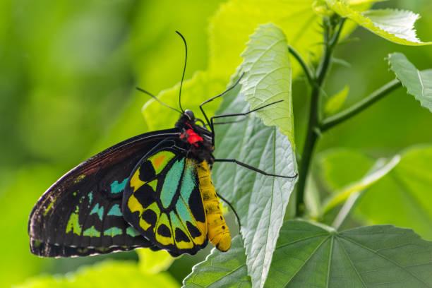 Primer plano de una mariposa toda colocado en una hoja - foto de stock