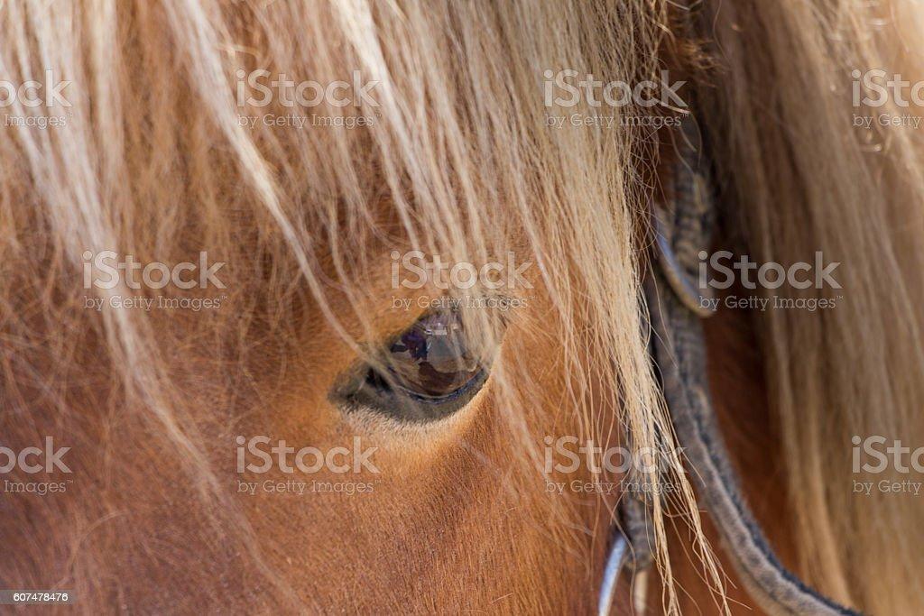 Close-up of an Eye of a shetlander pony stock photo