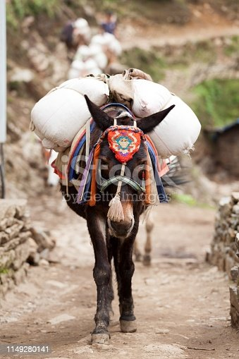 Close-up an mule caravan on route to Namche Bazar, Dudh Kosi valley, Solu Khumbu, Nepal.