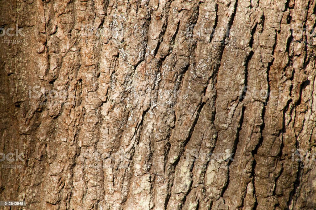 Close-up Of An Oak Tree's Bark, full framw view in sunlight. stock photo