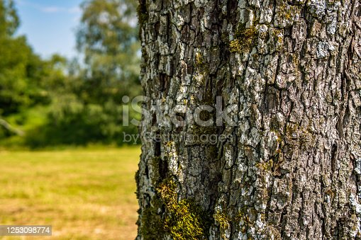 465559373 istock photo Close-up of an old tree with detailed, beautiful bark 1253098774