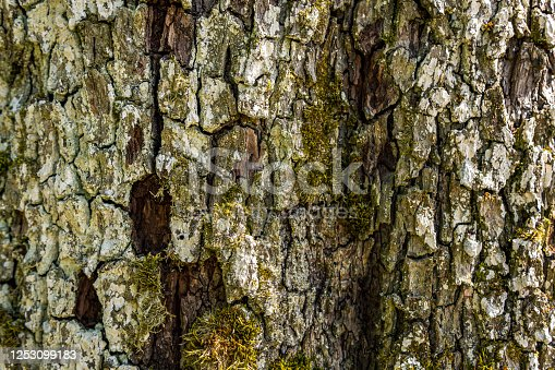 465559373 istock photo Close-up of an old tree with detailed, beautiful bark 1253099183