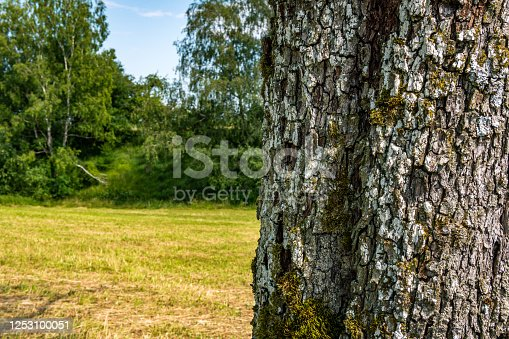 465559373 istock photo Close-up of an old tree with detailed, beautiful bark 1253100051