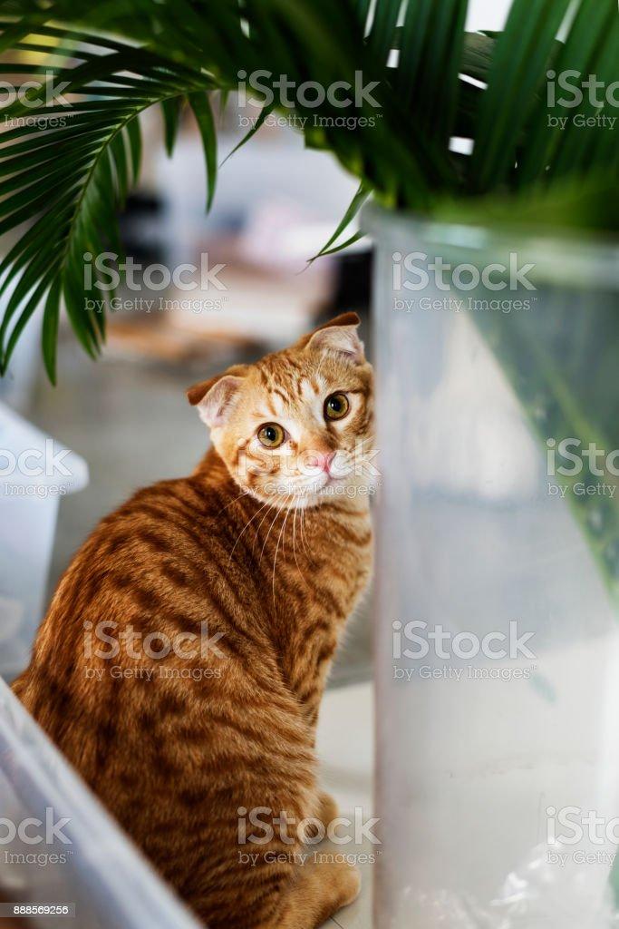 Closeup of an orange cat stock photo