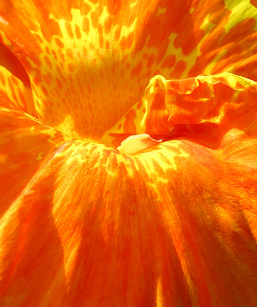 Closeup of an orange flower stok fotoğrafı